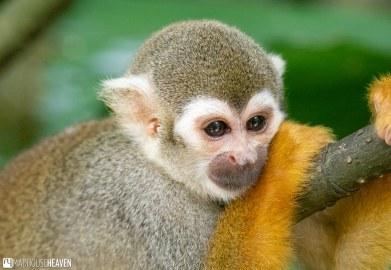 Singapore Zoo - 0539