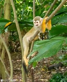 Singapore Zoo - 0536