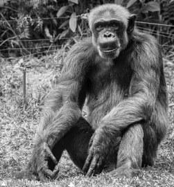 Singapore Zoo - 0703