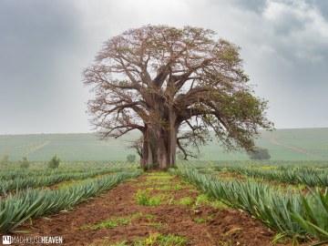 Kenya - 1567