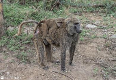 Kenya - 2278