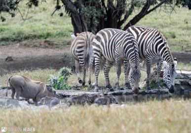 Kenya - 2113