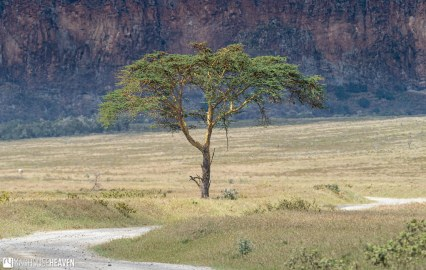 Kenya - 2098