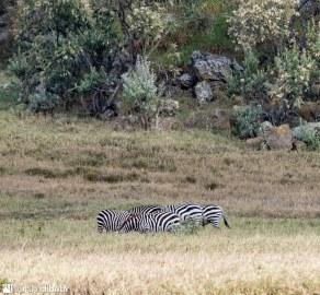 Kenya - 2088
