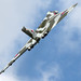 XH558 / G-VLCN - Avro Vulcan B2 - TVOC