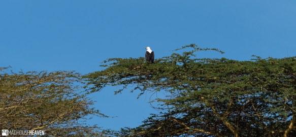 Kenya - 2485