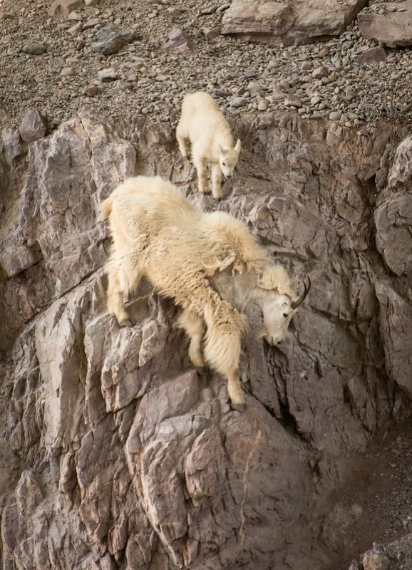 Sheer Cliff Walkers