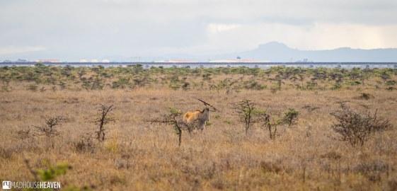 Kenya - 2827