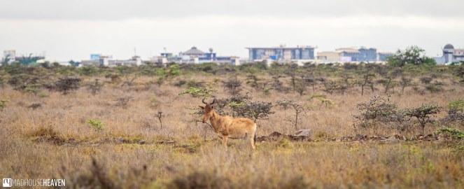 Kenya - 2826