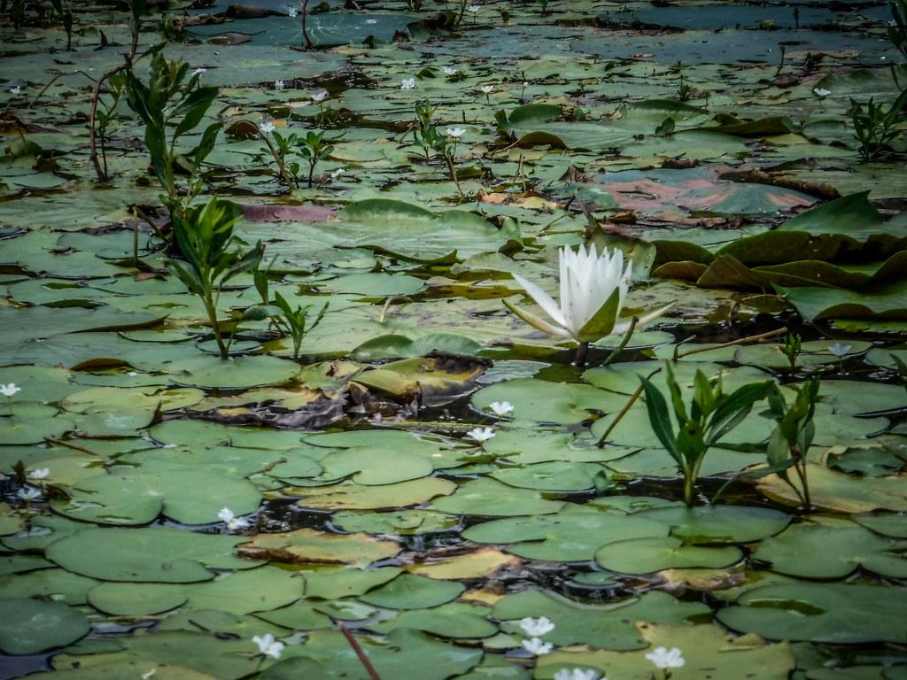 Lake Marion - Ferguson-172