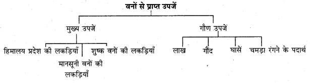 RBSE Solutions for Class 11 Indian Geography Chapter 8 भारत की प्राकृतिक वनस्पति 1