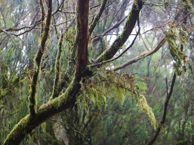 El bosque de laurisilva en Canarias