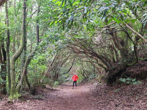 Sendero de el Bosque de los Enigmas en Tenerife