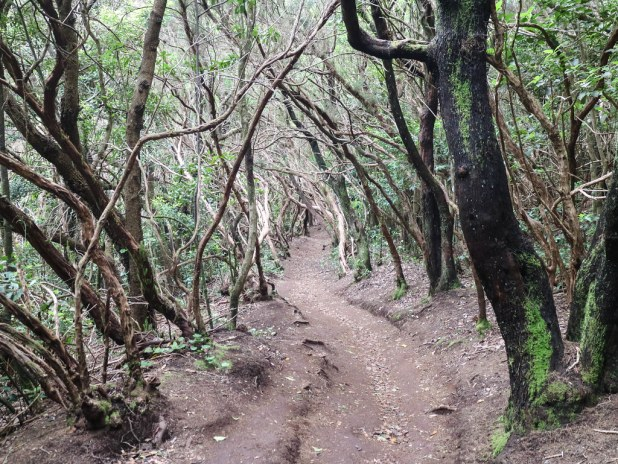 Camino por Anaga