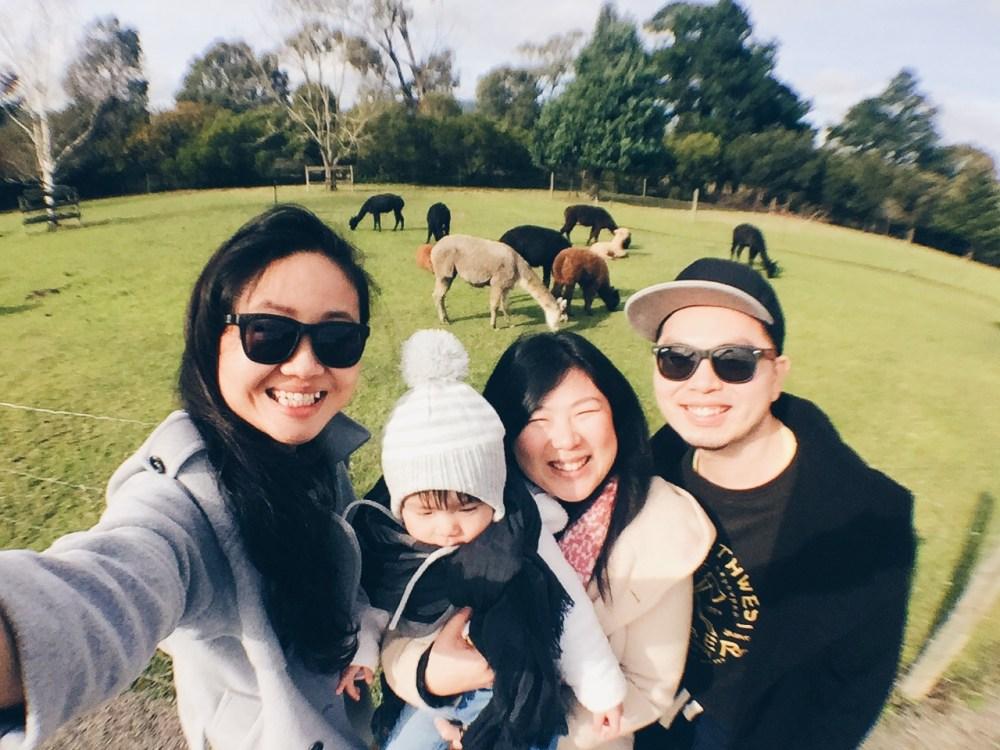 26 June 2016: Gerbera & Alpaca Farm @ The Big Bouquet | Healesville, Victoria