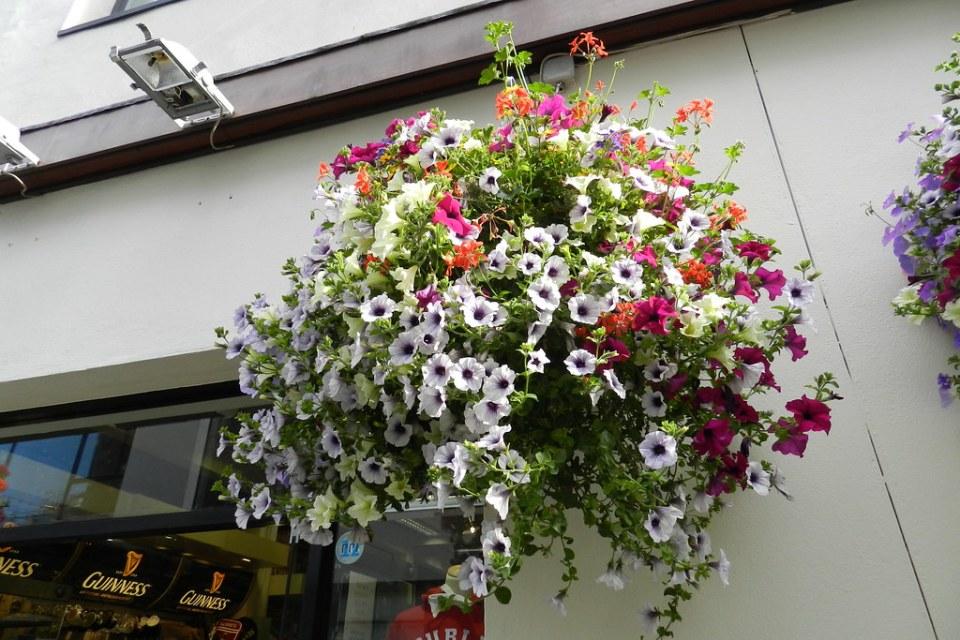 macetas de flores en la calle Dublin Republica de Irlanda 02