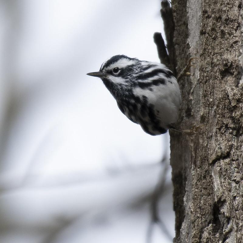 Return of the Birds - Birds' Nests, Part 2