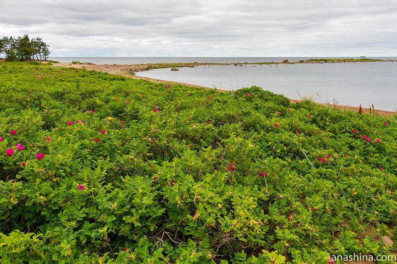 Финский залив, Карельский перешеек