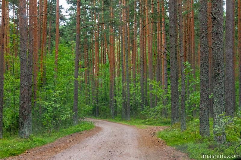 Дорога к месту смерти Микаэля Аггриколы