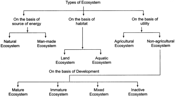 RBSE Solutions for Class 11 Physical Geography Chapter 22 Concept of Ecosystem 1