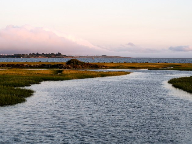 View from the Bay Trail at Meeker Slough