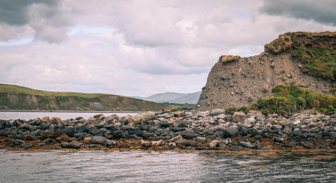 Colonia di foche, Clew Bay