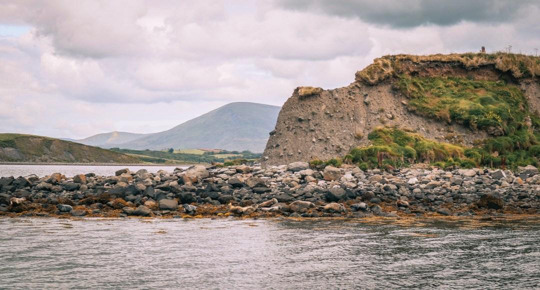 Foche nella Clew Bay, Irlanda