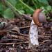 Slug eating mushroom