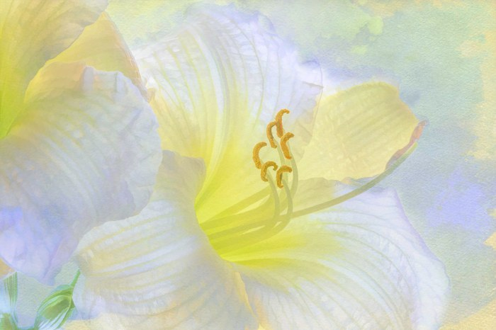 And the day came when the risk to remain tight in a bud was greater than the risk it took to bloom. Anais Nin