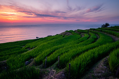 Sunset at Shiroyone Senmaida Rice Terraces