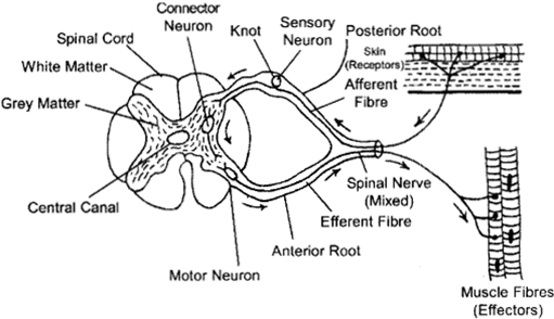 ISC Class 12 Biology Previous Year Question Papers Solved 2010 5