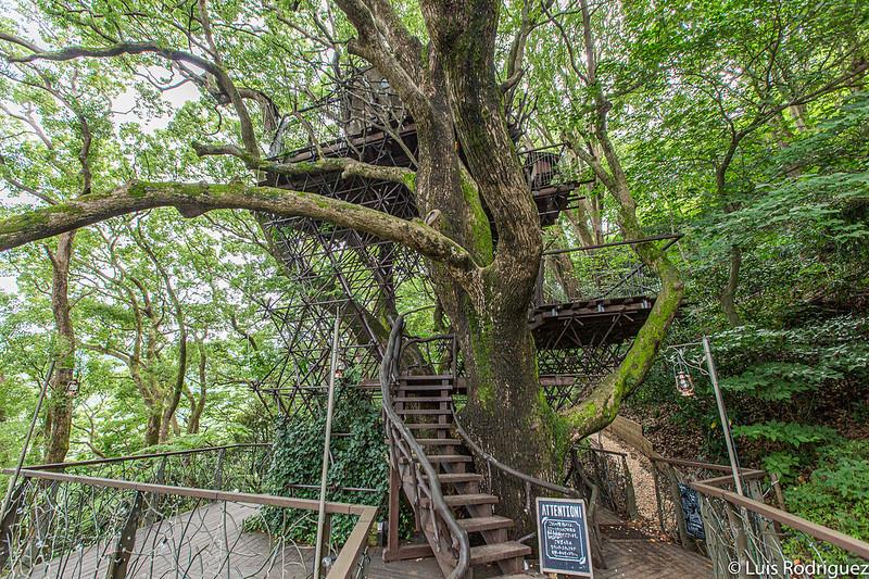Cabaña en lo alto del árbol