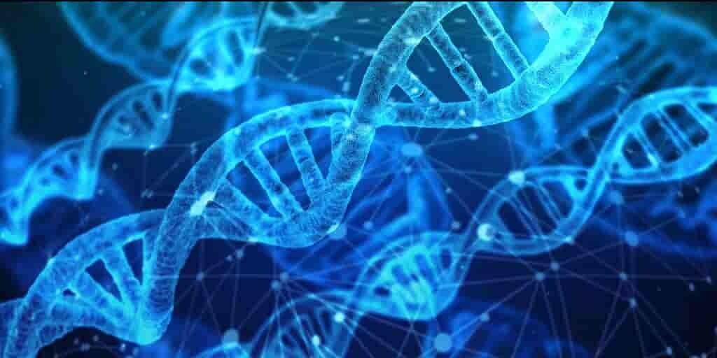 CRISPR-coupe-assemble-des-chrosomes-entiers