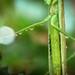 Moist Mantis Leg