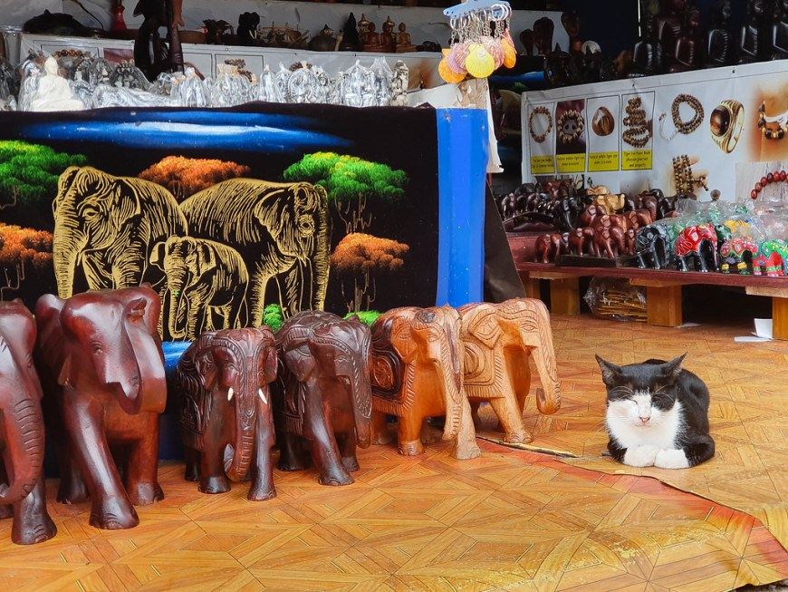 A photo from a shop. On the floor there are different size brown elephants carved from wood, next to which a black and white cat is sleeping. Behind them there is a carpet with three elephants standing among orange and green trees. In the background there are more carved elephants, from simple brown to very colorful.