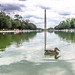Washington Monument with Duck