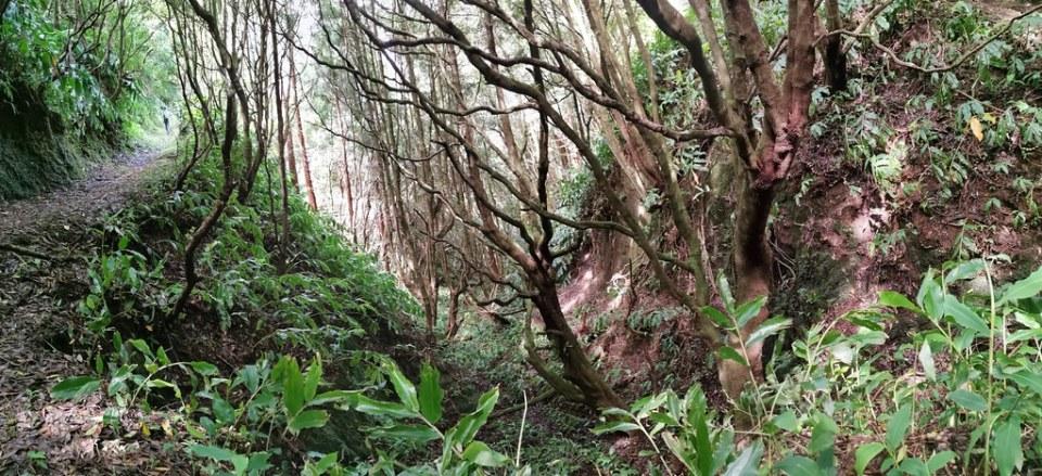 flora del sendero Ruta del Agua Isla San Miguel Azores Portugal 10