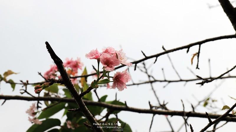 IMG_4230