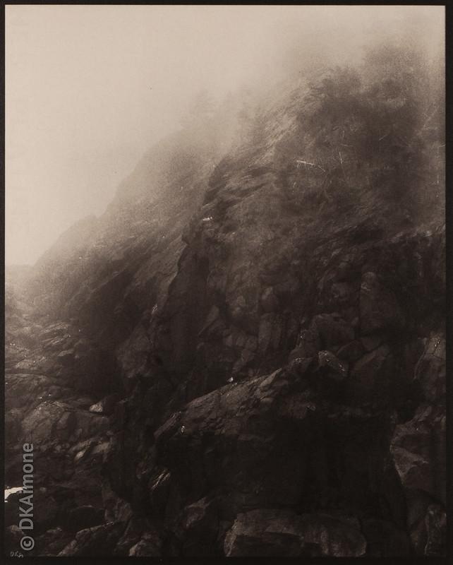 Gull on Cliff in Fog