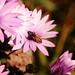 bloomin bee
