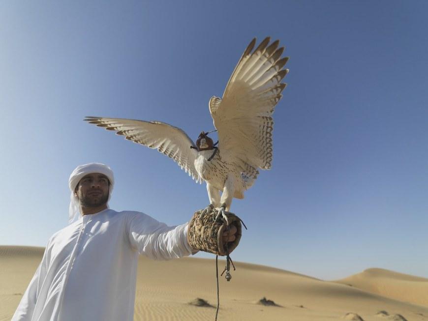 falcon-1264605_1920