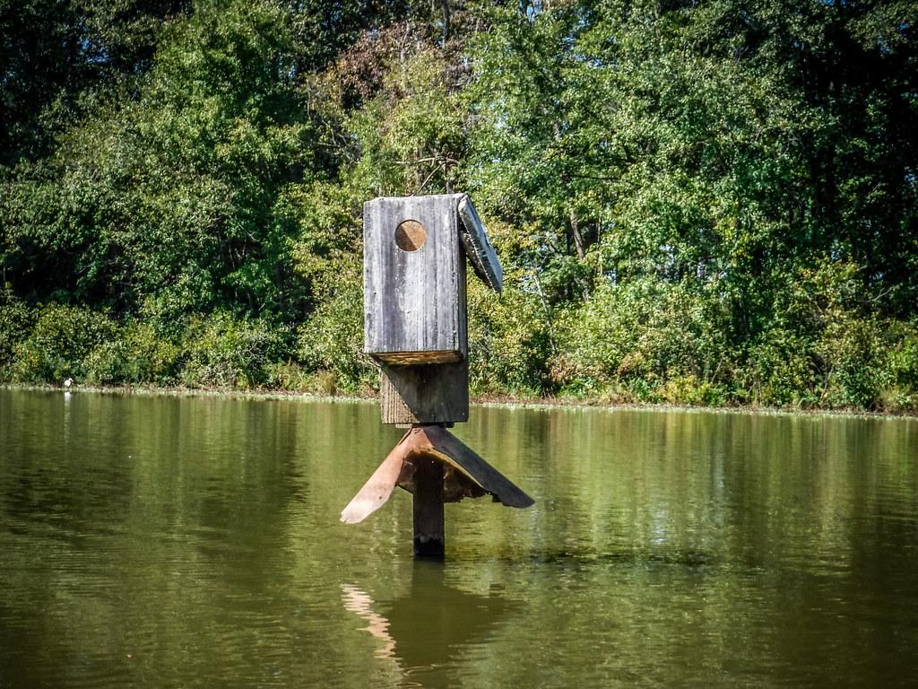 Berry Shoals Pond-52
