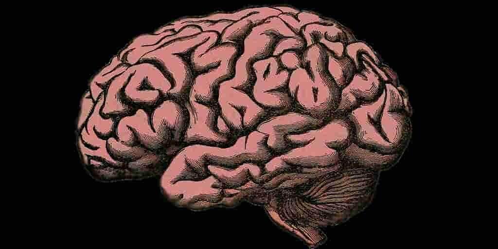 des-protéines-pour-freiner-maladie-Alzheimer