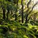 Dart Valley Woods