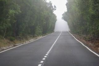 Im Nebelurwald