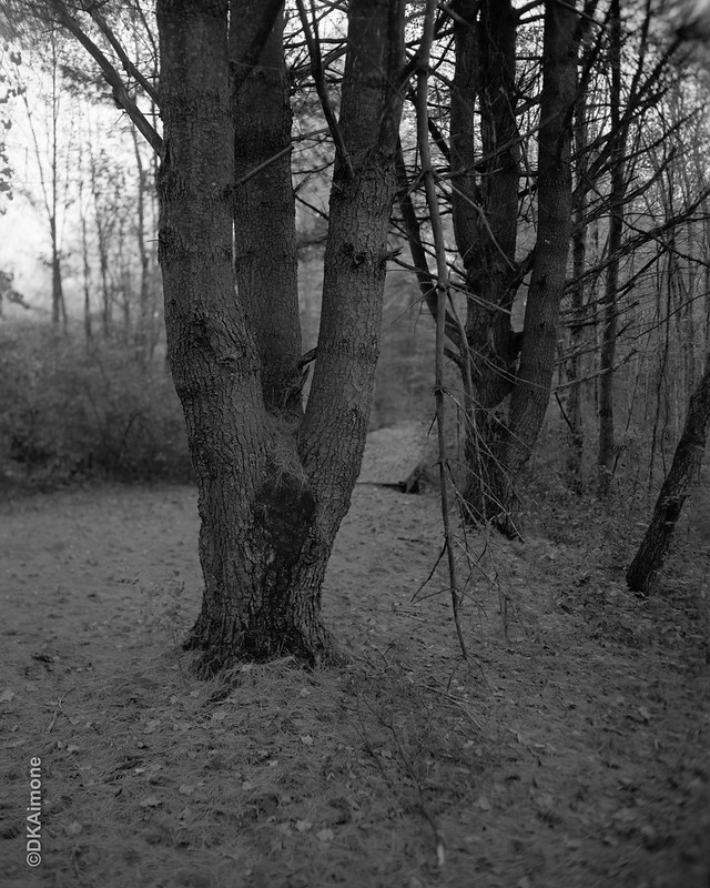 Tree in the Path