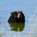 Black Bear soaking