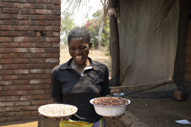 Mary Twaya with a plate  plate full of pigeon peas and maize harvested from her plot. Photo: Shiela Chikulo/CIMMYT.