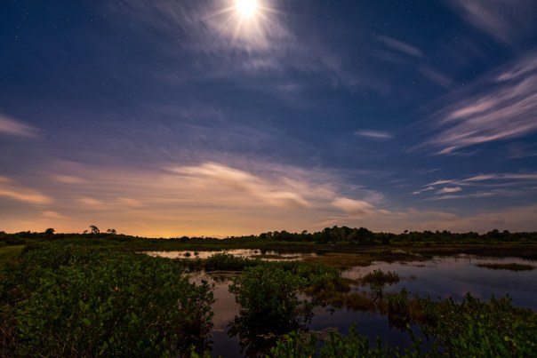 Moonlit marsh 1