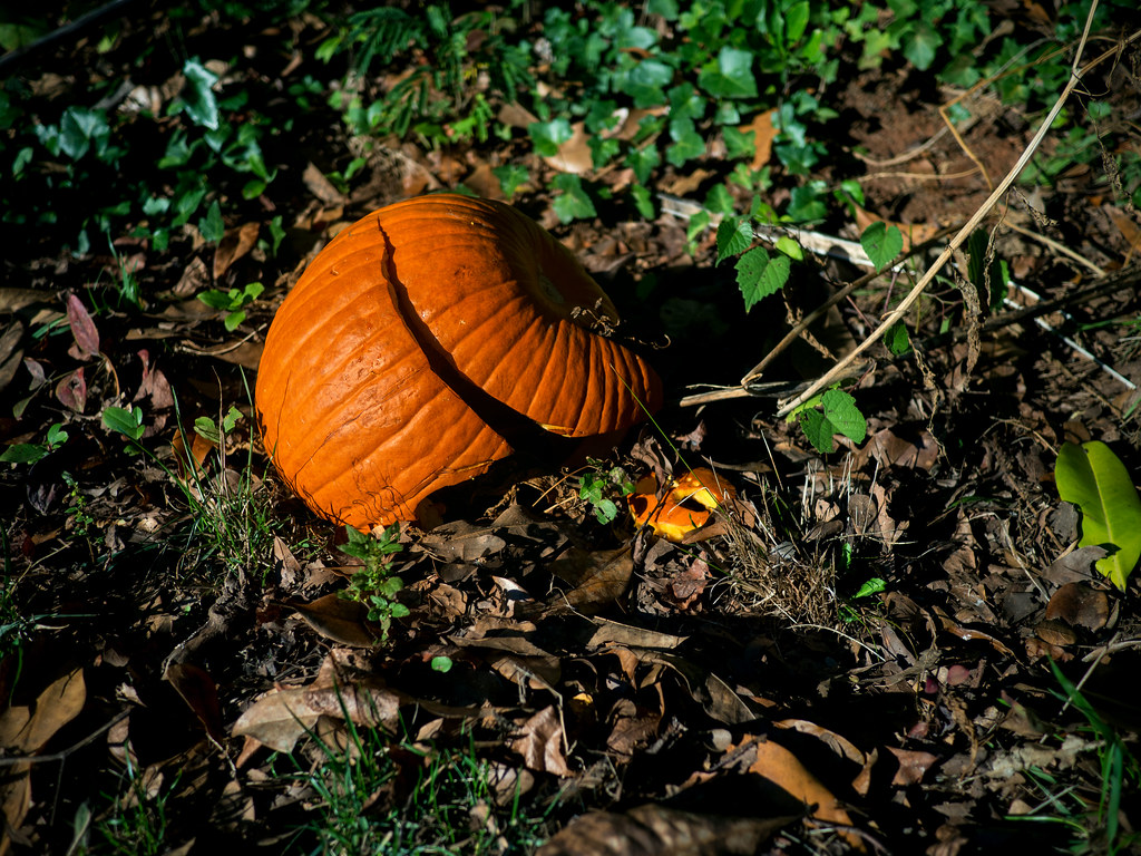 Smashing pumpkins | Smashed by early Halloween hooligans, th… | Flickr